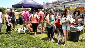 2015 Bark and Brew Fest